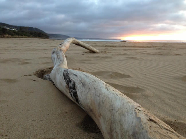 The things you find on the beach! Lorne, Victoria, Australia