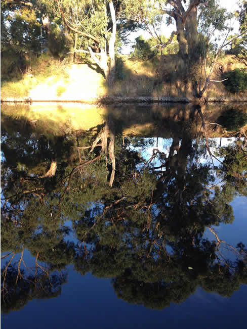 Reflections, trees in the water, at Lorne, Victoria, Australia