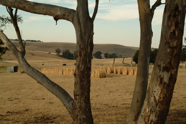 Hay bales in a field, at Ceres, near Geelong, Victoria, Australia