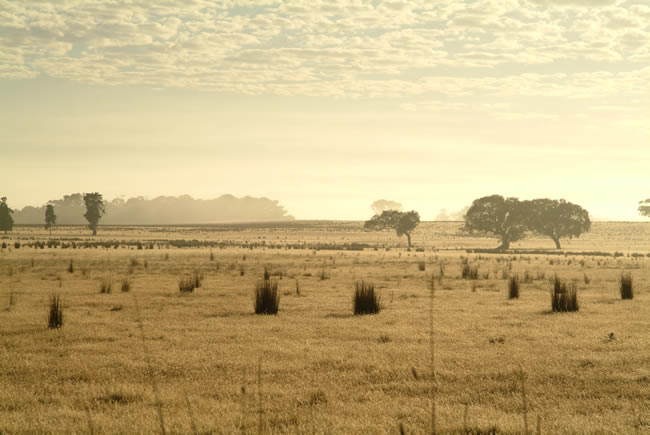 Dry pasture, at Mt Duneed, near Geelong, Victoria, Australia