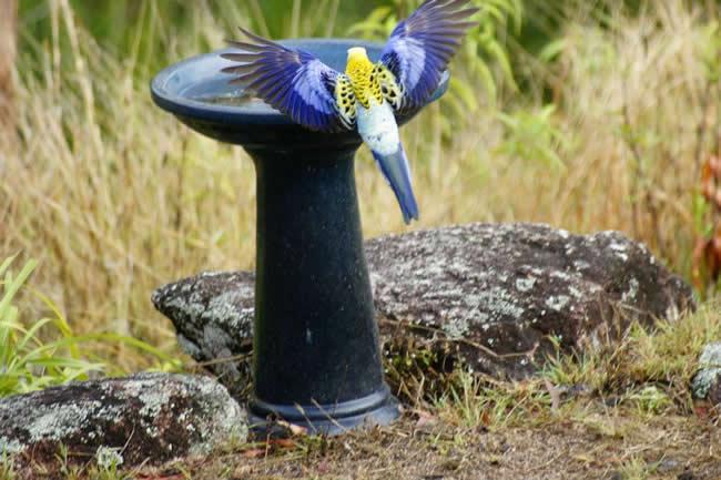 Birds Found In Australia This Is Australia