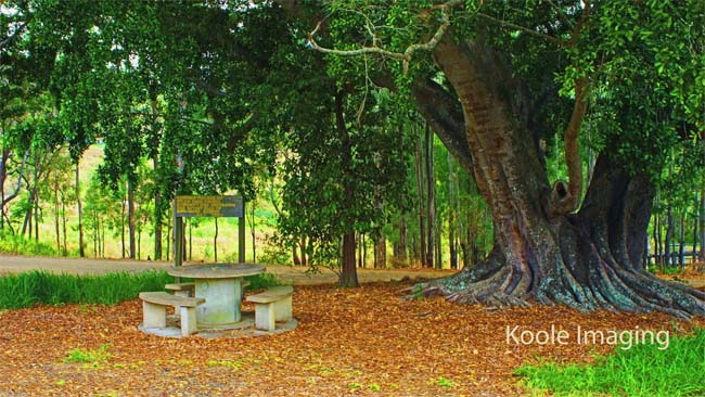 Peaceful picnic area, near the Boolboonda Tunnel, Queensland, Australia.