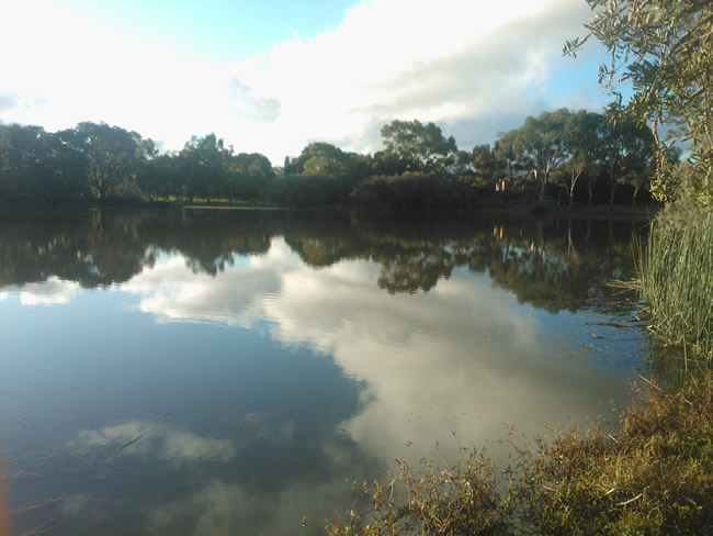 Quiet reflections in the placid water of Augustine's Dam, Highton, Geelong, Australia on a sunny winter's afternoon.